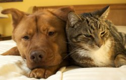 Pets are an easy and effective way to deal with stress.